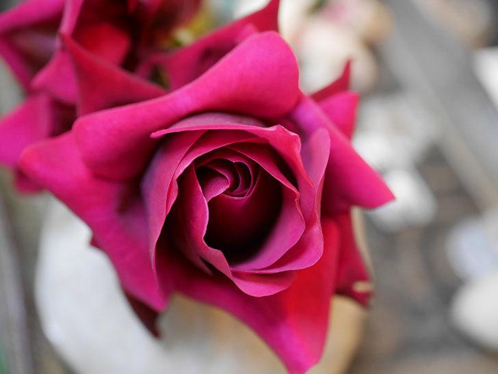 オデュッセイア(Odysseia)の新苗の秋花を切り花にした。半ツルバラ。2020年-004.jpg