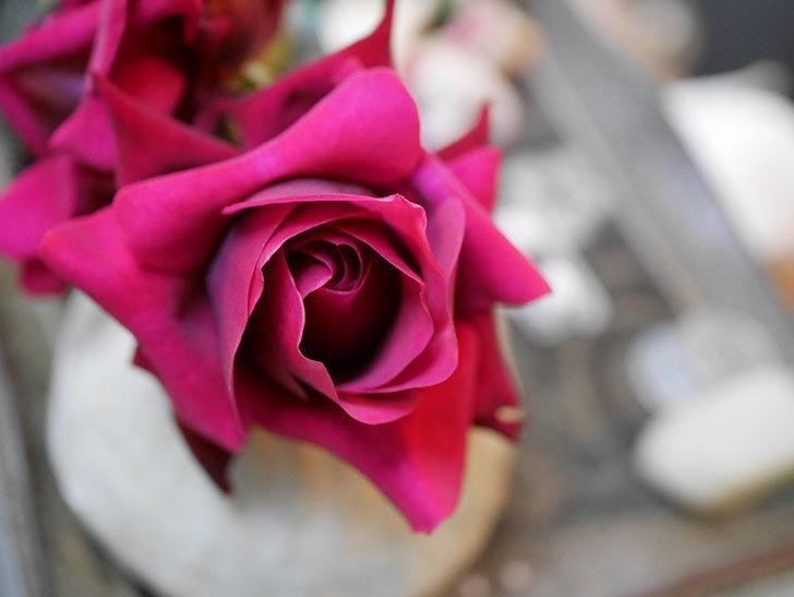 オデュッセイア(Odysseia)の新苗の秋花を切り花にした。半ツルバラ。2020年-005.jpg