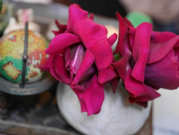 オデュッセイア(Odysseia)の新苗の秋花を切り花にした。半ツルバラ。2020年-008.jpg