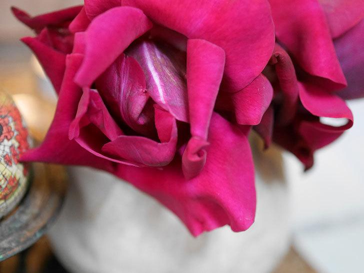 オデュッセイア(Odysseia)の新苗の秋花を切り花にした。半ツルバラ。2020年-009.jpg