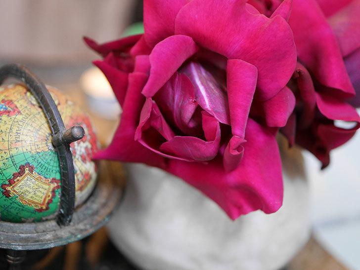 オデュッセイア(Odysseia)の新苗の秋花を切り花にした。半ツルバラ。2020年-010.jpg
