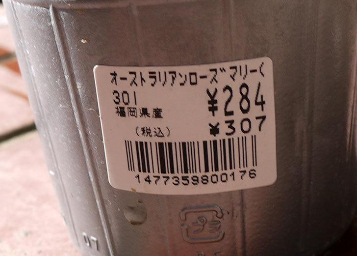 オーストラリアンローズマリー-モーニングライトをホームズで買って来た4.jpg