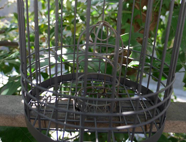 カインズでワイヤー花台-鳥かご-中を買って来た。2018年-17.jpg