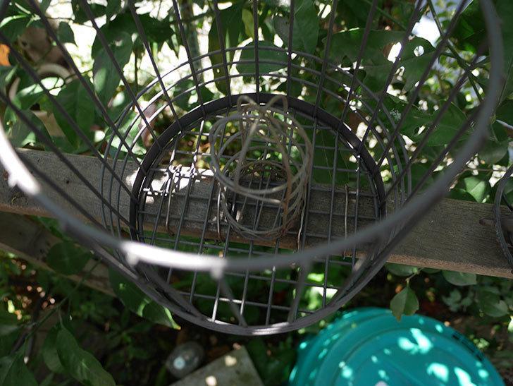 カインズでワイヤー花台-鳥かご-中を買って来た。2018年-18.jpg