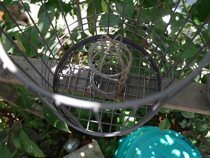 カインズでワイヤー花台-鳥かご-中を買って来た。2018年-19.jpg
