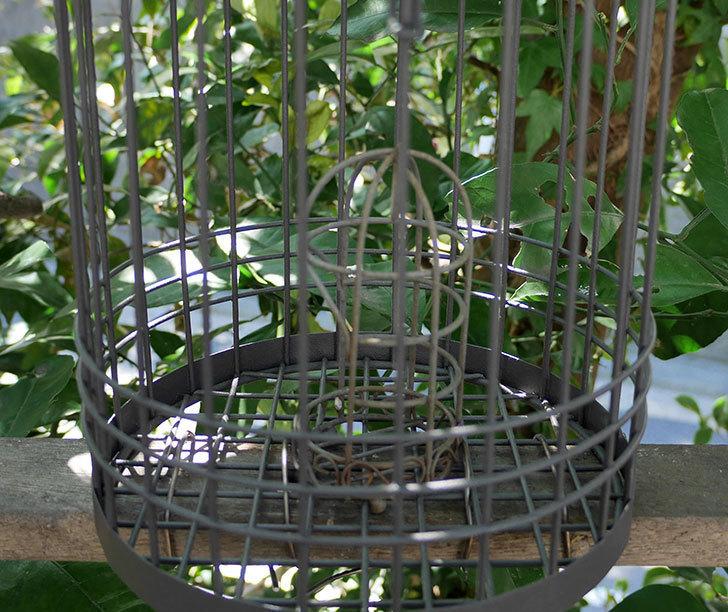 カインズでワイヤー花台-鳥かご-中を買って来た。2018年-20.jpg