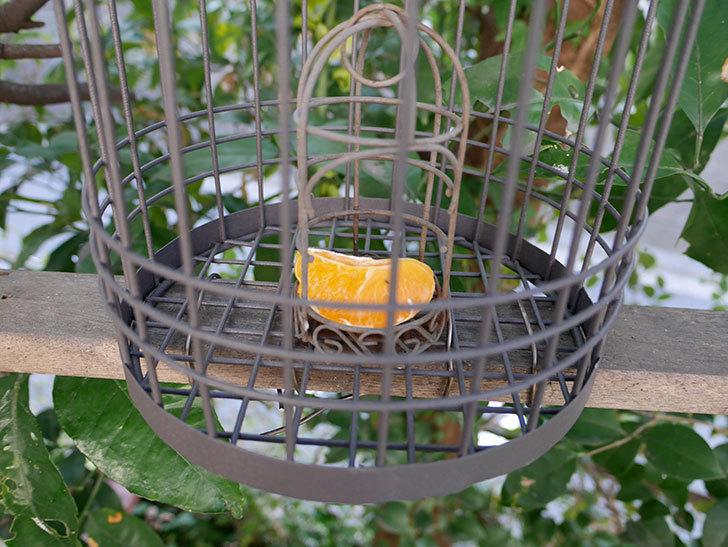 カインズでワイヤー花台-鳥かご-中を買って来た。2018年-23.jpg
