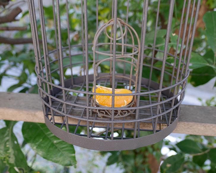 カインズでワイヤー花台-鳥かご-中を買って来た。2018年-24.jpg