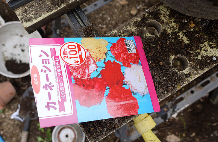 カーネーションのタネを蒔いた。2016年-1.jpg