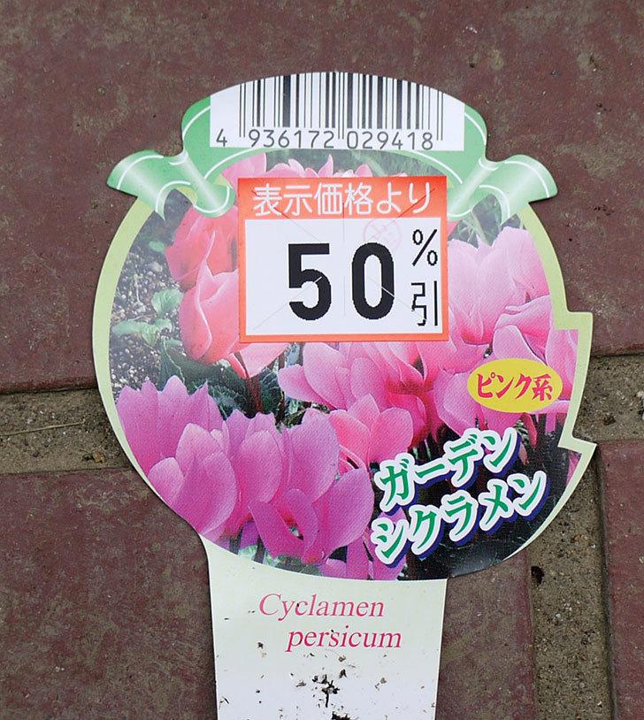ガーデンシクラメンがケイヨーデイツーで半額になっていたので5個買って来た。2016年-5.jpg