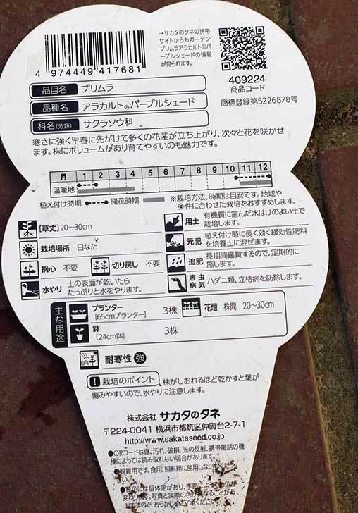 ガーデンプリムラ-アラカルト-パープルシェード3個買って来た4.jpg