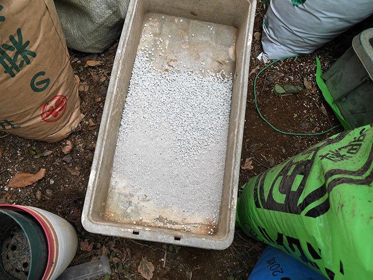 キングローズ(ツルバラ)に穴を掘って寒肥をやった。2018年-12.jpg