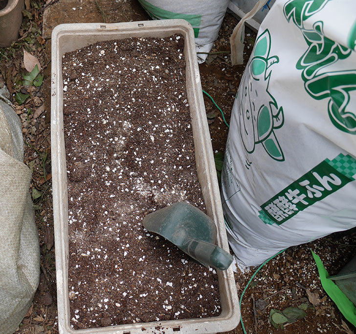 キングローズ(ツルバラ)に穴を掘って寒肥をやった。2018年-13.jpg
