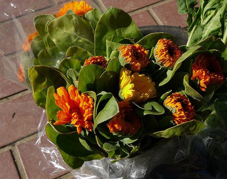 キンセンカの切り花を買って来た1.jpg