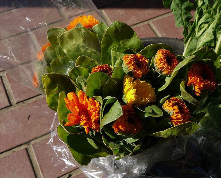 キンセンカの切り花を買って来た3.jpg
