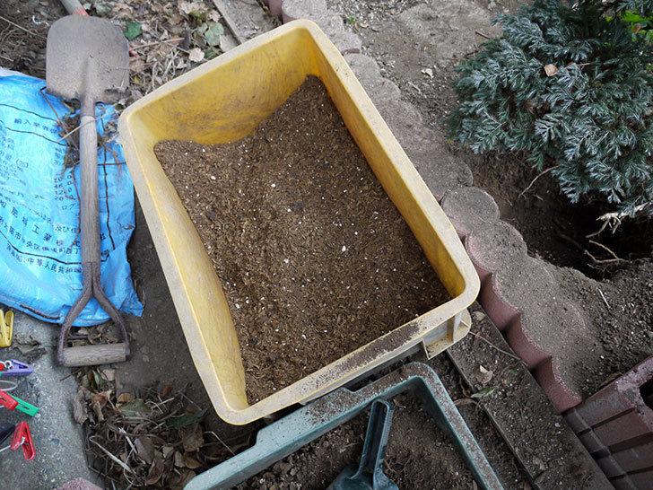 クレパスキュール(ツルバラ)に穴を掘って寒肥をやった。2017年-5.jpg