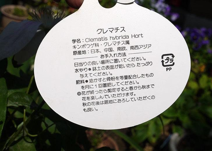 クレマチス-アンドロメダの開花株がホームズで1,200円だったので買って来た。2016年-5.jpg