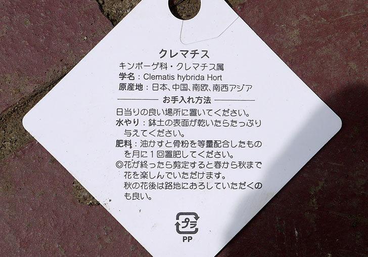 クレマチス-ジリアンブレイズがホームズで600円だったので買って来た。2016年-4.jpg