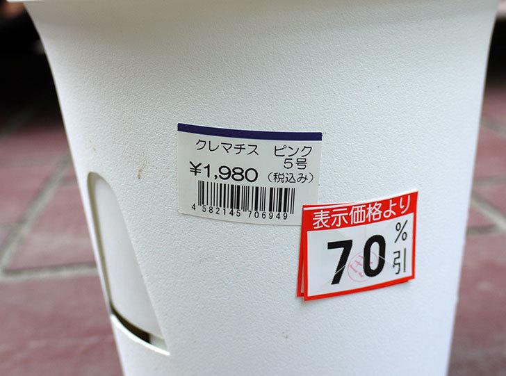 クレマチス-阿吹(アブキ)がケイヨーデイツーで70%offだったので買って来た。2016年-3.jpg