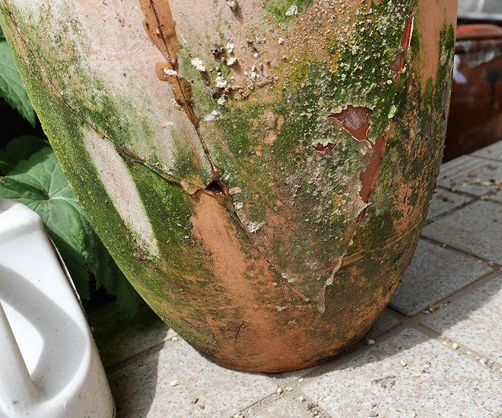 クレマチスの鉢が強風で倒れて割れたので修理した。2018年-11.jpg