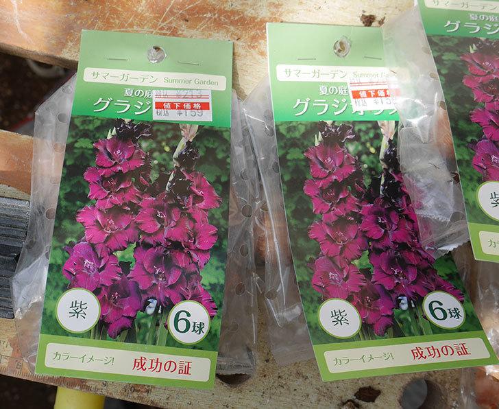 グラジオラスの球根6個入りがケイヨーデイツーで159円だったので6袋買って来た。2019年-2.jpg