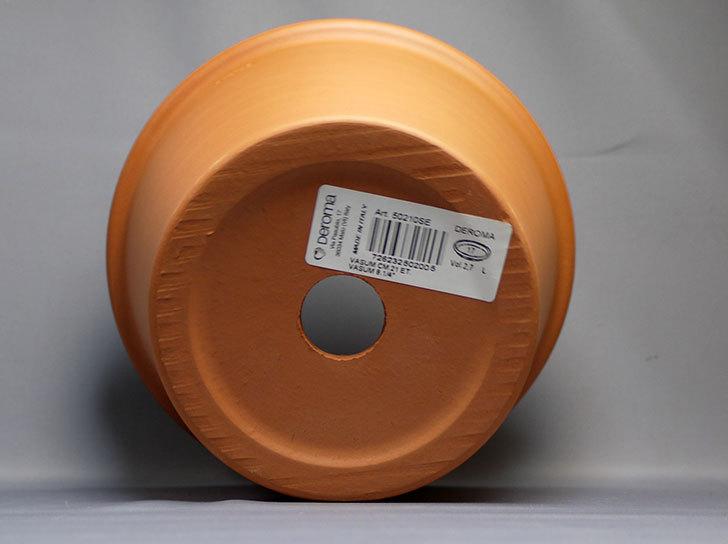 グリーンポット-バッサム-21cmDE-50210を買った5.jpg