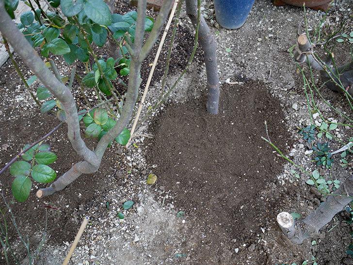 コントゥ・ドゥ・シャンパーニュに寒肥をやってオベリスク設置し誘引した。2017年-14.jpg