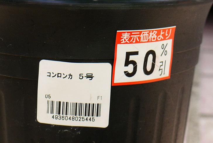 コンロンカがケイヨーデイツーで半額だったので買って来た4.jpg