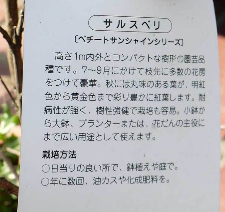 サルスベリ-ペチートプラムの苗を買って来た。2016年-4.jpg