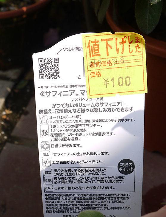 サントリーのサフィニアマックス-グレープがホームズで100円だったので4個買って来た5.jpg