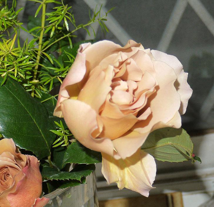 ジュリア(ツルバラ)を切り花にした。2016年-3.jpg