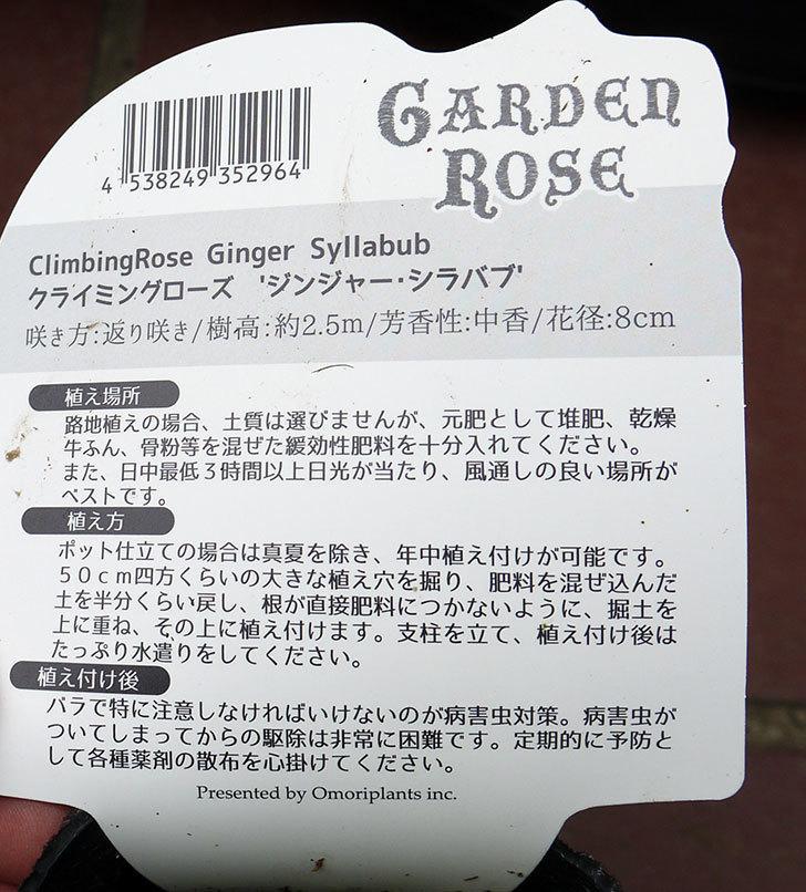 ジンジャーシラバブ(ツルバラ)の新苗買って来た4.jpg