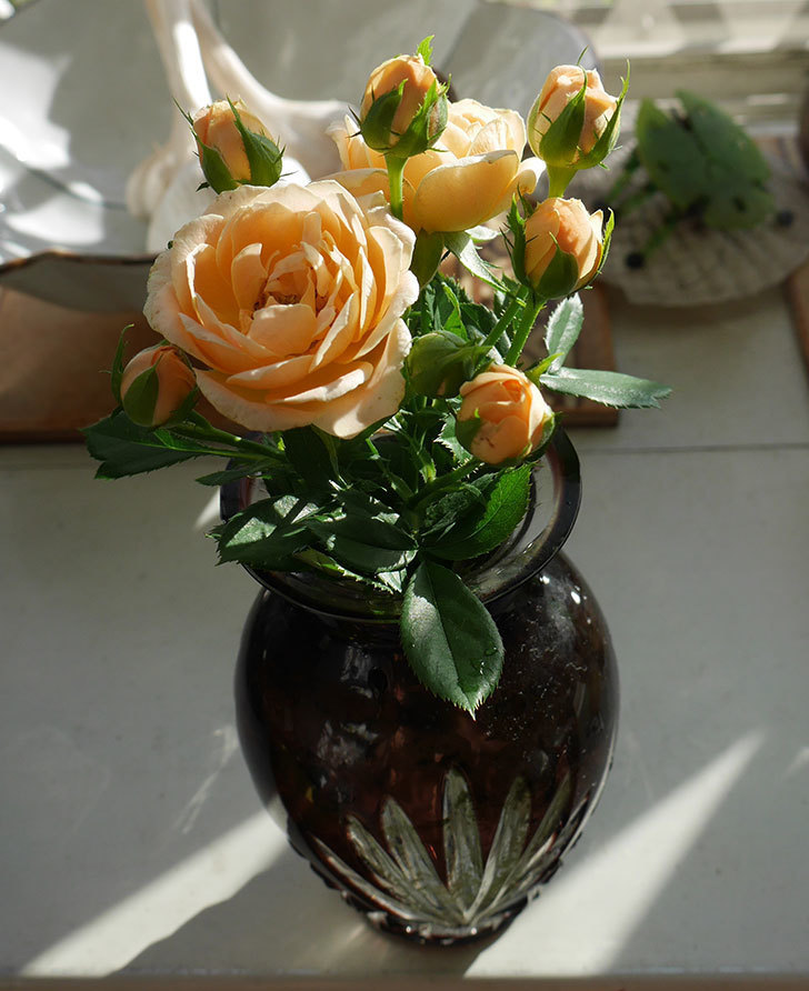 スイートドリーム(ツルバラ)の夏花が咲いた。2018年-2.jpg