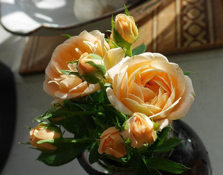 スイートドリーム(ツルバラ)の夏花が咲いた。2018年-3.jpg