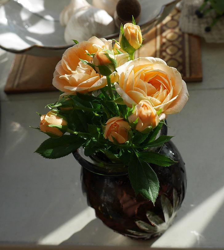 スイートドリーム(ツルバラ)の夏花が咲いた。2018年-4.jpg