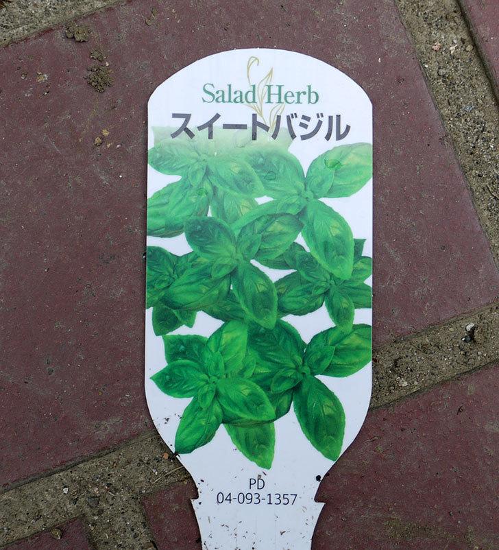 スイートバジルの苗をケイヨーデイツーで買って来た。2016年-3.jpg