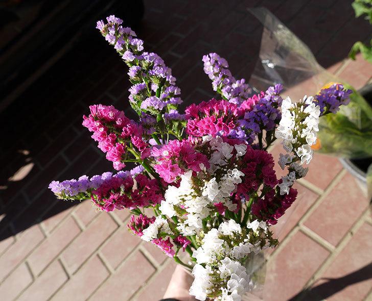 スターチスの切り花を買って来た1.jpg
