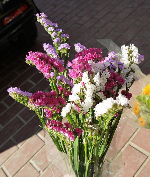 スターチスの切り花を買って来た2.jpg