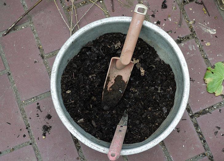 スナックエンドウの苗をプランターに植えた4.jpg