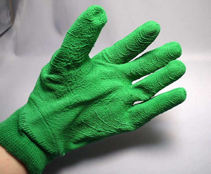 セフティー3-園芸用手袋-スーパーハード用-Lを買った1.jpg