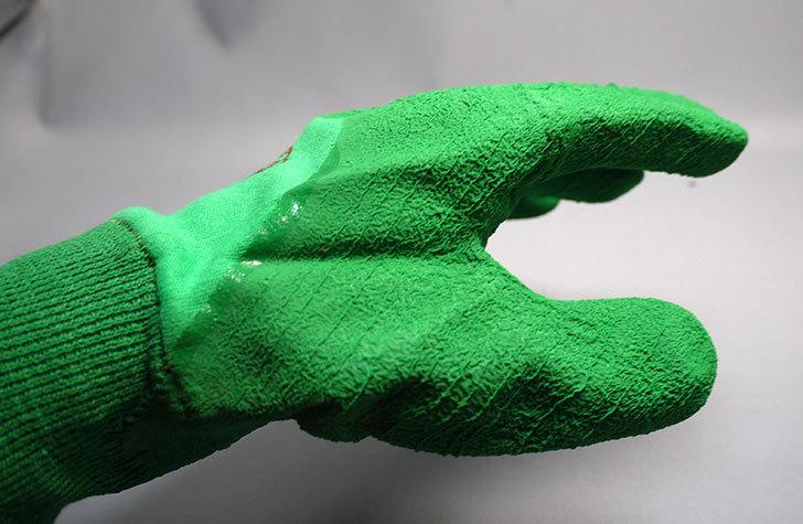 セフティー3-園芸用手袋-スーパーハード用-Lを買った6.jpg