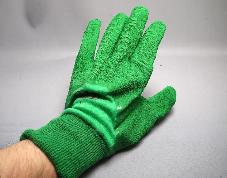 セフティー3-園芸用手袋-スーパーハード用-Lを買った7.jpg