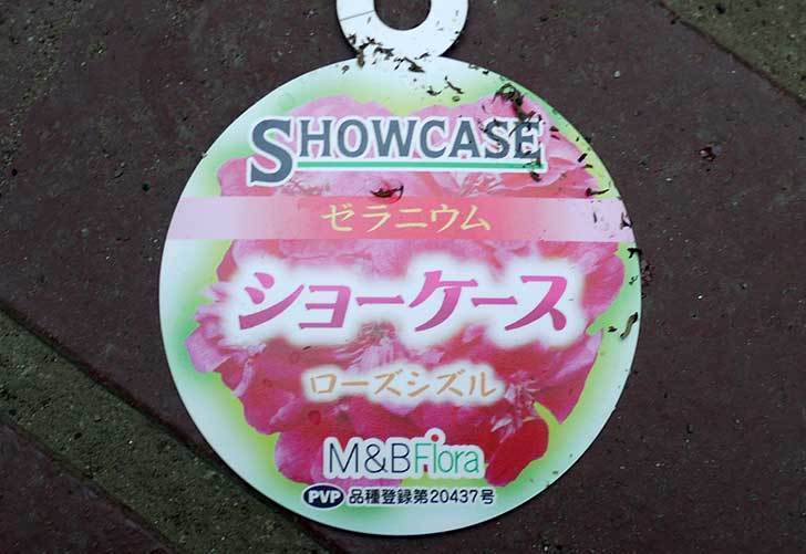 ゼラニウム-ショーケース-ローズシズルがホームズで150円だったので買って来た3.jpg