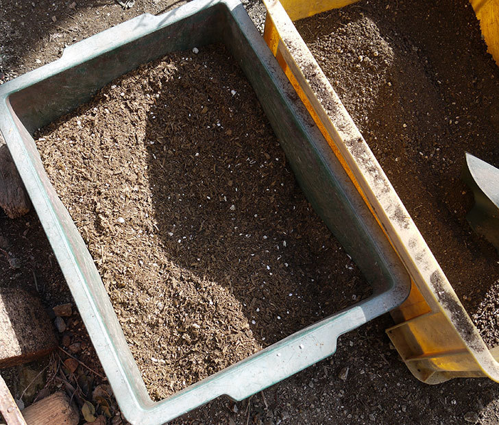 ソニャドール(ツルバラ)に穴を掘って寒肥をやった。2017年-3.jpg