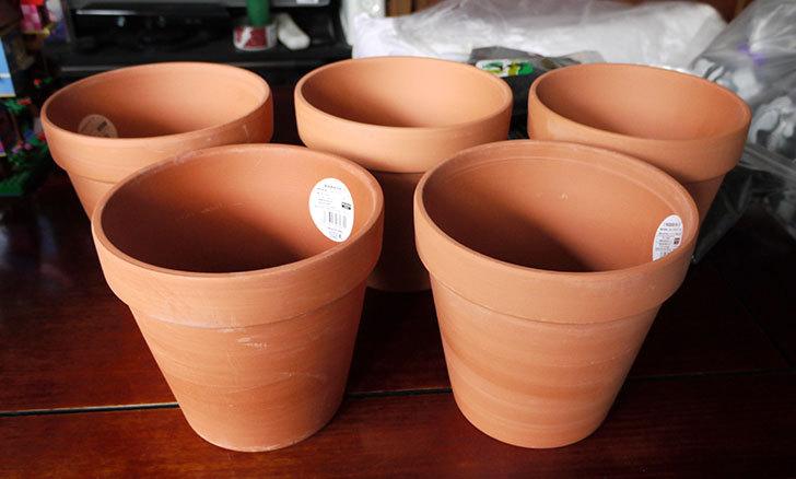 ダイソーでD-陶磁器植木鉢-54を5個買って来た1.jpg