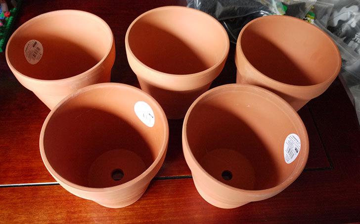 ダイソーでD-陶磁器植木鉢-54を5個買って来た2.jpg