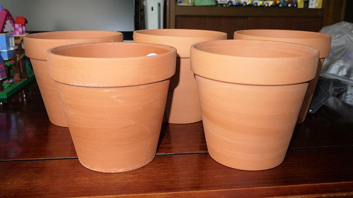 ダイソーでD-陶磁器植木鉢-54を5個買って来た3.jpg