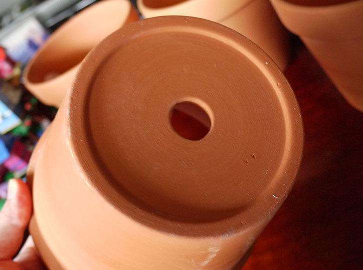 ダイソーでD-陶磁器植木鉢-54を5個買って来た5.jpg