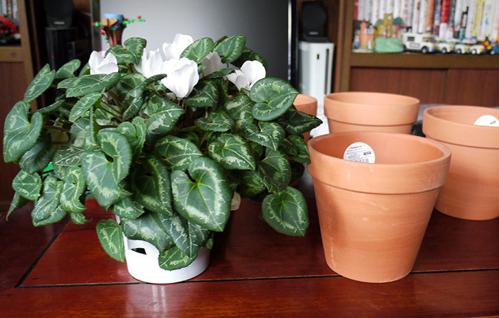 ダイソーでD-陶磁器植木鉢-54を5個買って来た6.jpg