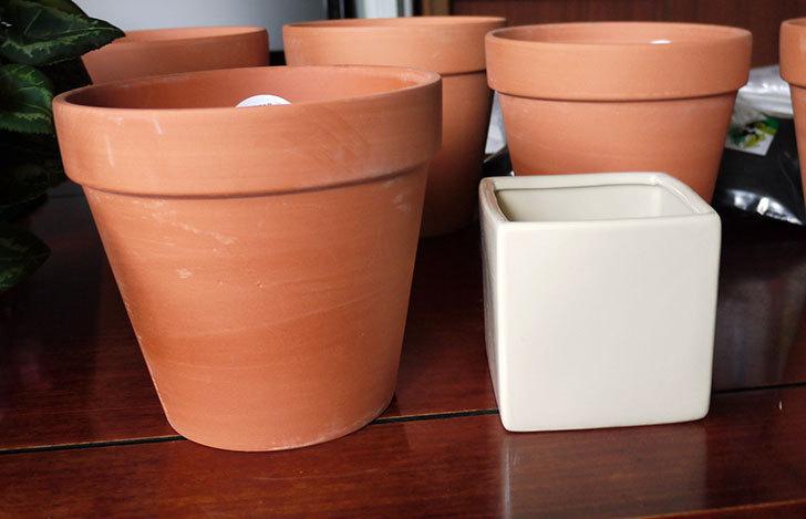 ダイソーでD-陶磁器植木鉢-54を5個買って来た7.jpg